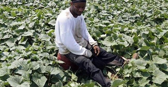 Ga. puts probationers to work harvesting crops