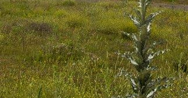 Spain ghost airports: symbols of boom turned bust
