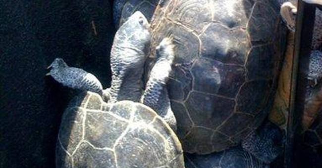 NYC airport invaded by turtles, delaying flights