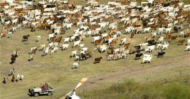 Famed Australia ranch to be sold due to export ban