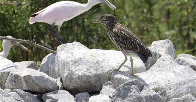 Texas wetland restoration could be model for Gulf