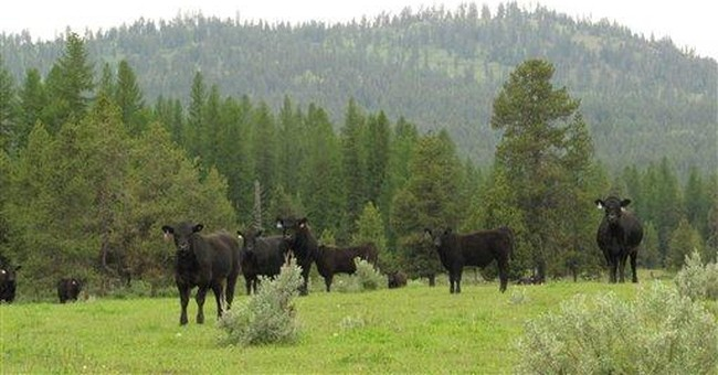Western ranchers fight push to give up brands
