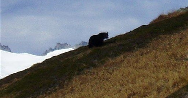 Photo confirms grizzly in Washington's N. Cascades