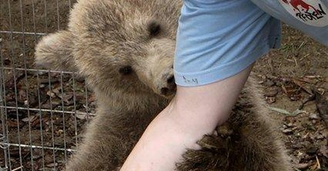 Romanian orphanage welcomes Slovenian bear cub