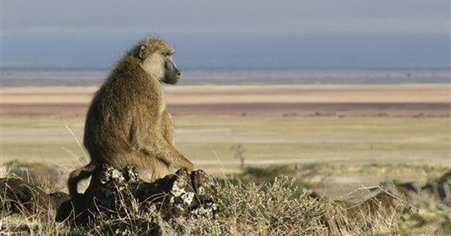 Being the top ranking baboon is a high-stress job