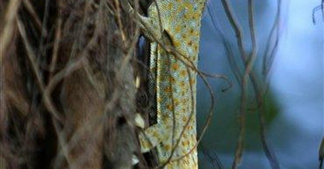 Philippines warns against geckos as AIDS treatment