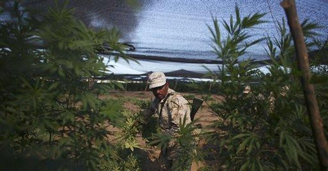 Mexican army burns crops of huge marijuana farm