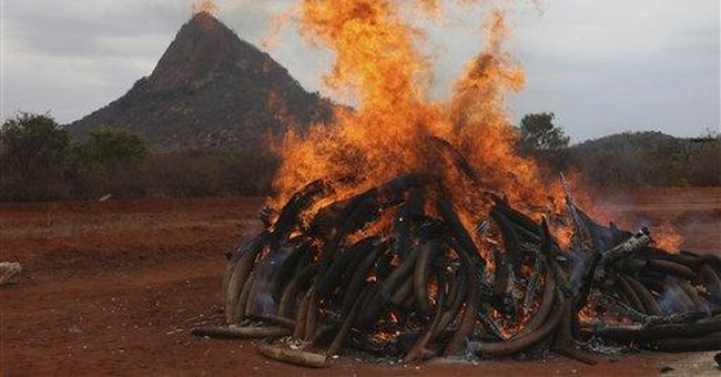 Kenya torches 5 tons of ivory taken from poachers