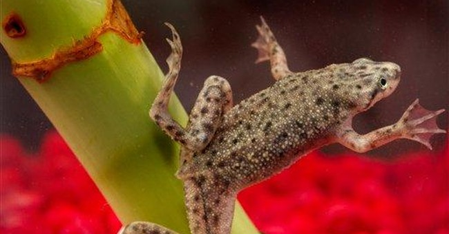 CDC: Frogs tied to salmonella being sold again