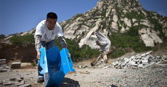 Rescue center in China nurses raptors back to life