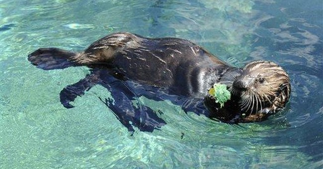 Orphaned Alaska sea otter honored at NYC party