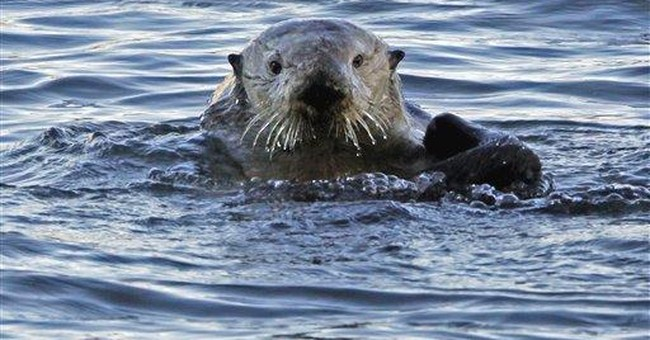 Study shows best places to protect marine mammals