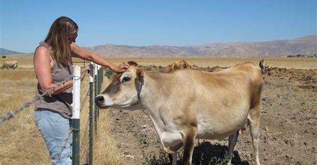 Raw milk regulations tighten as demand increases
