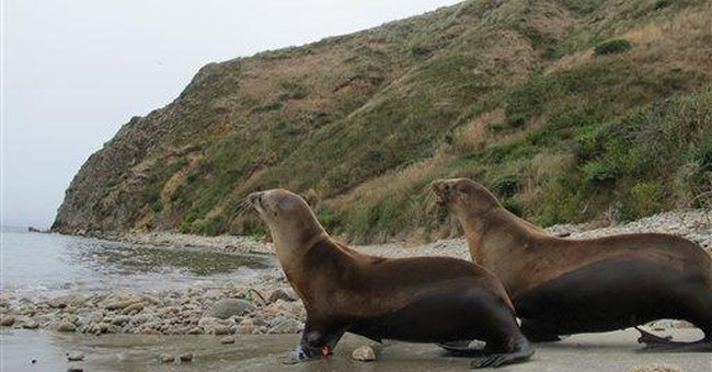 Marine ER releases its 10,000th rescued sea lion