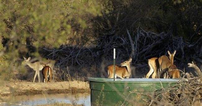 Texas drought will harm wildlife habitat for years