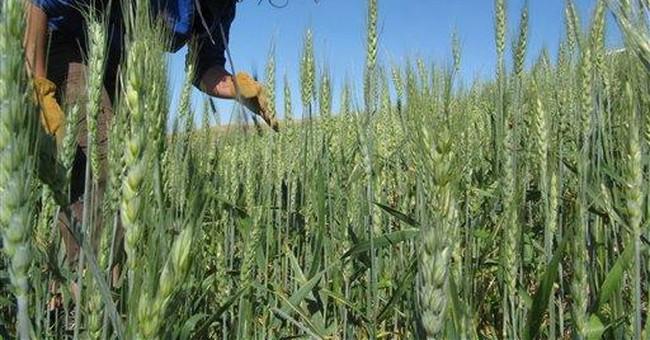 College organic, sustainability programs growing