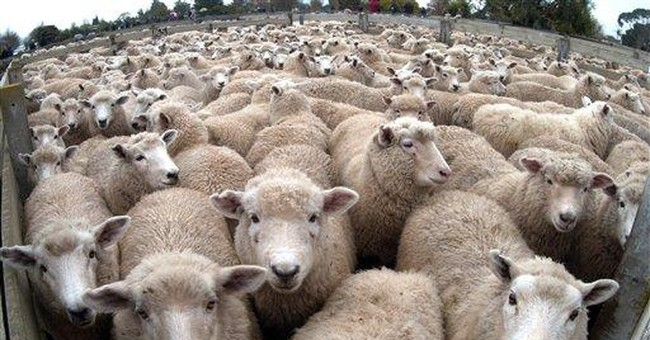 New Zealanders: Rugby, sheep and sex don't mix