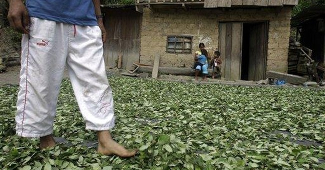 Peru re-evaluates coca policy