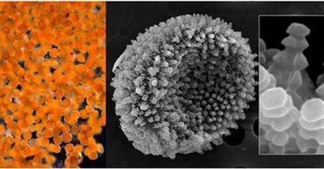 Orange goo on Alaska shore was fungal spores