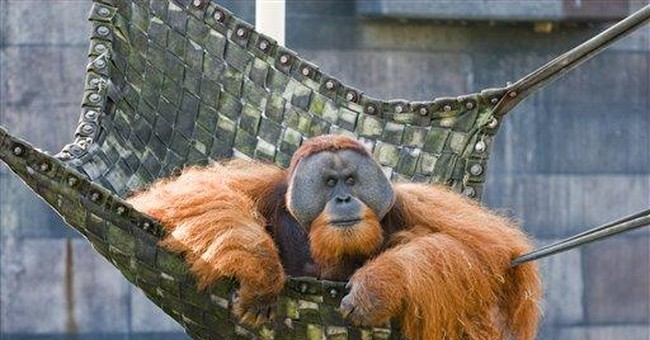 Ohio zoo orangutan dies with respiratory illness