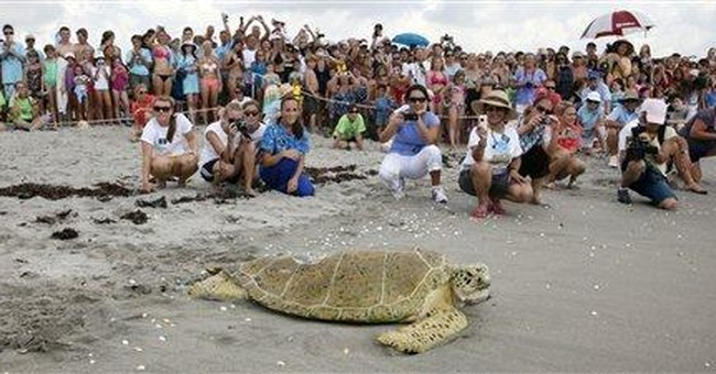 Sea turtle who had global following found dead