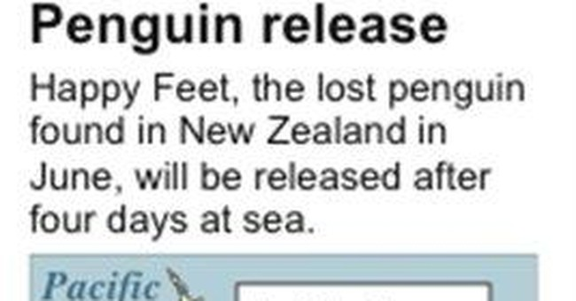 New Zealand's penguin visitor starts journey home