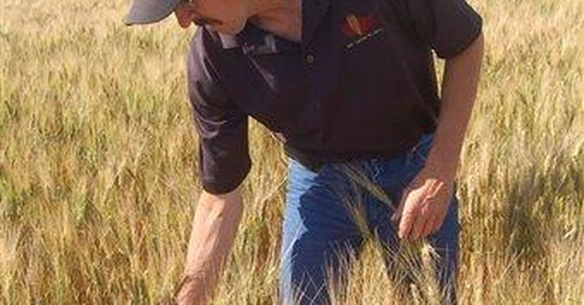 Flooded fields in ND lead to higher pasta prices