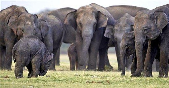 Sri Lanka count finds more elephants than expected