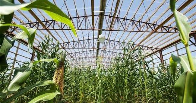 Drought machine helps develop hardier crops