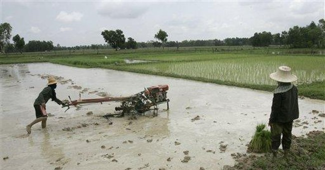 Thai rice subsidy scheme to push up world prices