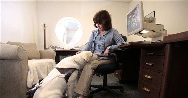 Guide dogs deal with more distractions than ever