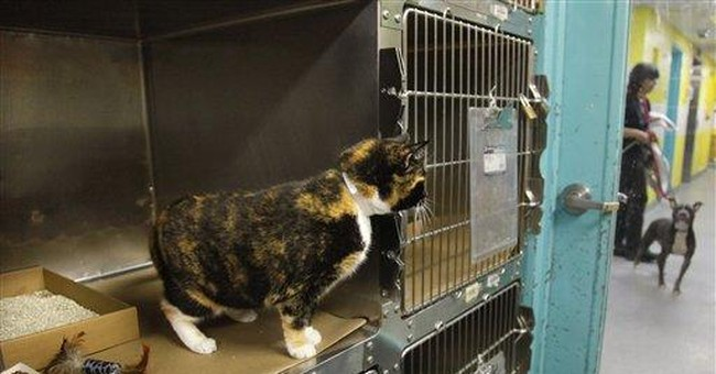 Colo. cat, missing 5 years, is found on NYC street