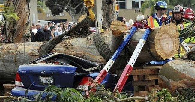 Tree falls on car in Calif., killing female driver