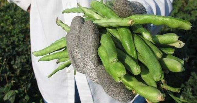 Calif. group seeks to interest blacks in farming