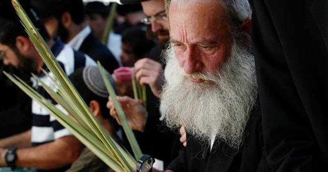Egypt bans palm frond exports for Jewish holiday