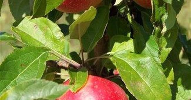 APNewsBreak: Settlement in SweeTango apple lawsuit