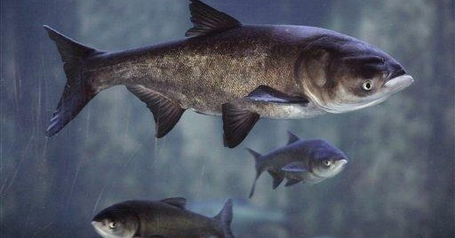 Illinois launches Asian carp anti-hunger program