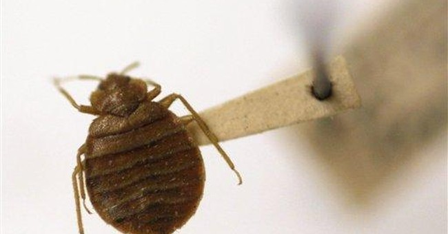 Scores got sick, 1 died trying to kill bedbugs