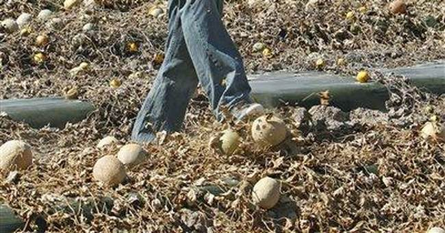 Killer cantaloupe, scary sprouts _ what to do?