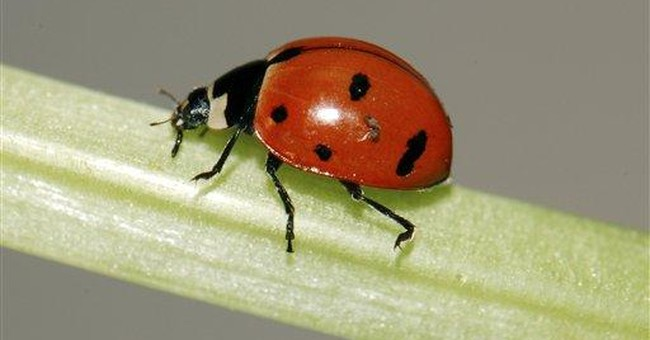 NY state insect found in NY, 1st time in decades
