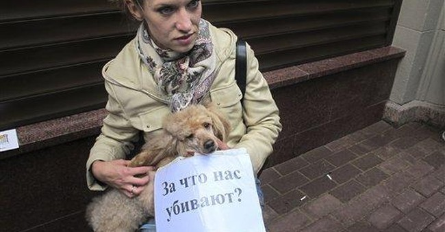 Moscow activists demand protection for stray dogs