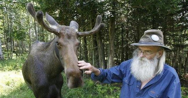 Preserve owner admits covering up Vt. moose death