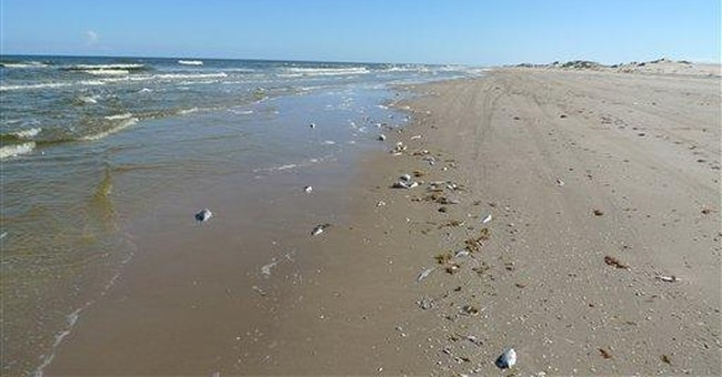 Gulf algae bloom affects much of Texas Gulf Coast