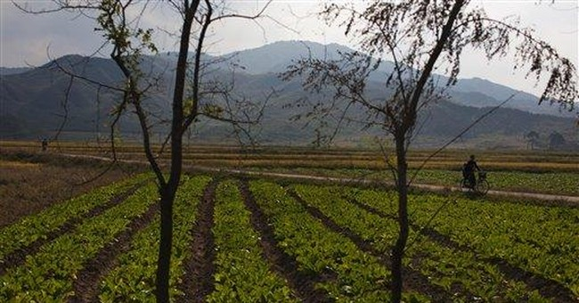 Autumn harvest watched warily in food-poor NKorea