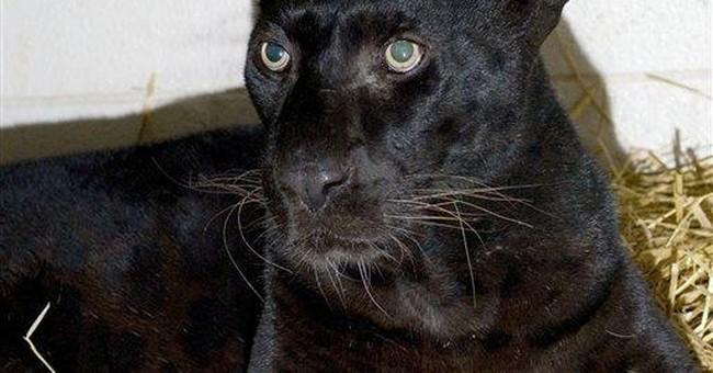 Hanna urges tough Ohio rules on exotic animals