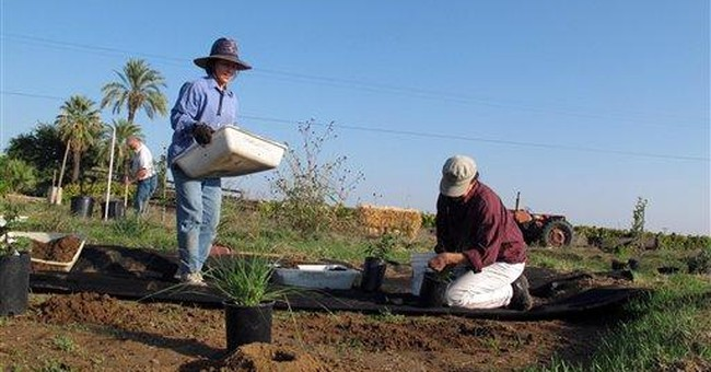 Farmers add plants to attract, nourish bees