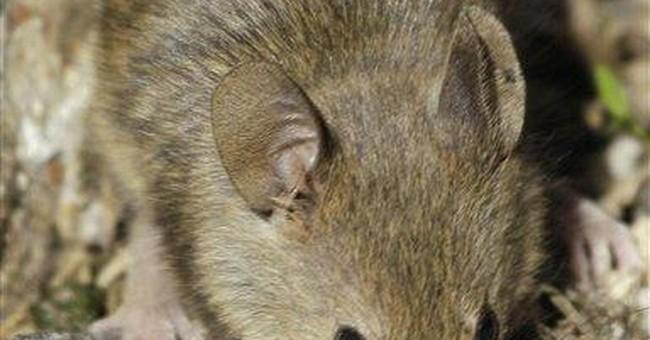 Plan to kill Farallones mice a balancing act