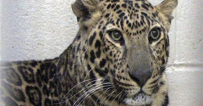 Ohio zoo: Quarantine testing won't start for weeks