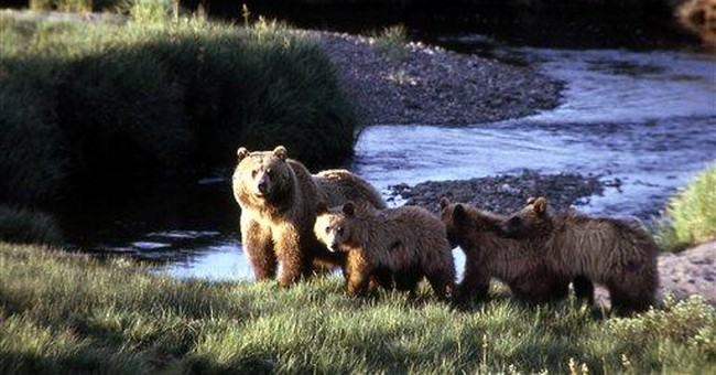 Hunter escapes grizzly attack with minor injuries