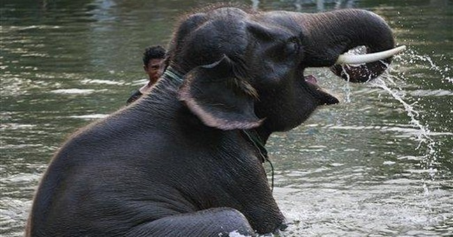 Thailand flooding strands elephants in Ayutthaya